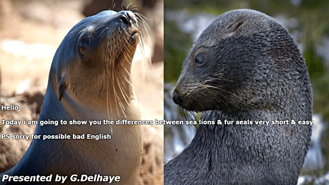 sealfurseal0