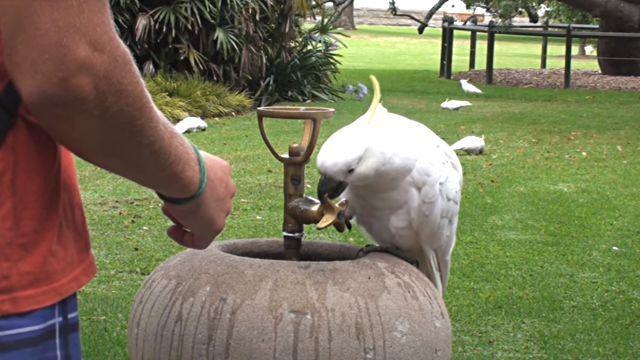 thirstybird3