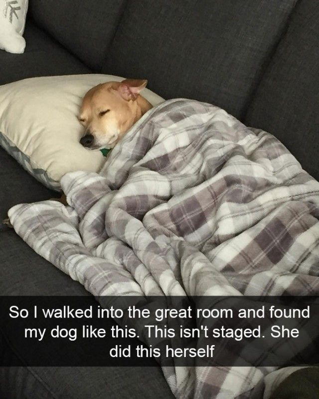 hilarious-dog-snapchats12_e