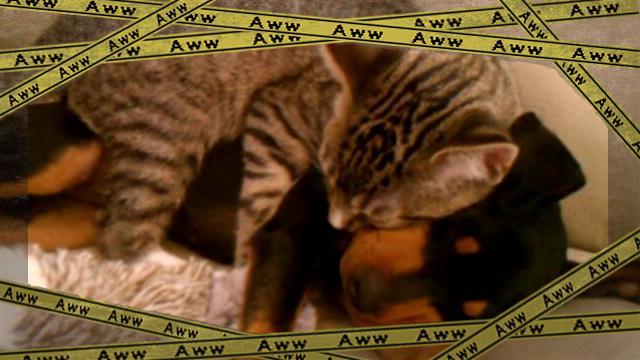 catanddog 3-frame
