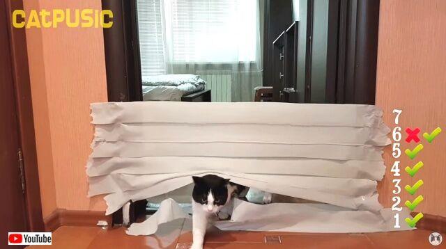 toiletpaperchallenge6_640