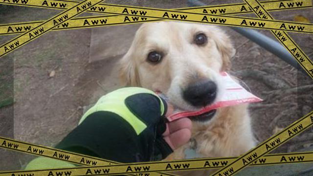 maildog3 [www-frame