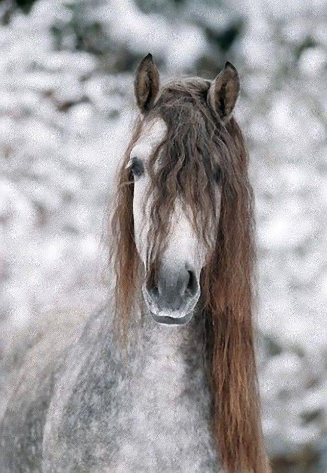 horse7_e