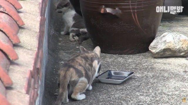 rooftopcat9_e