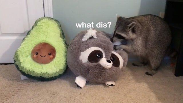 raccoonpillow1_e