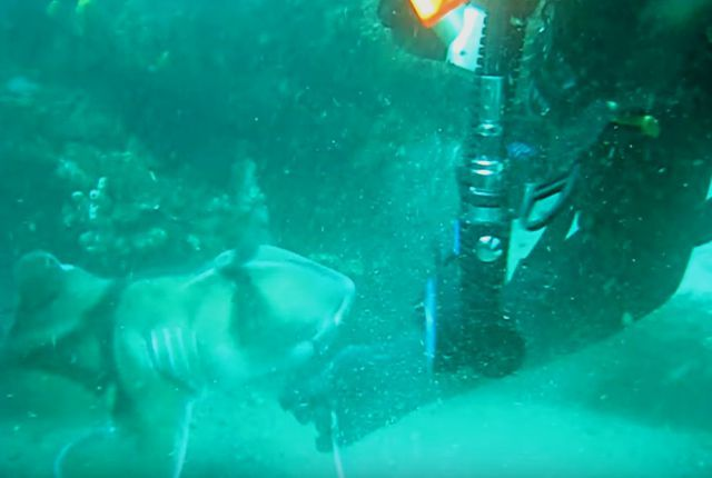 sharkaskingforhelp2