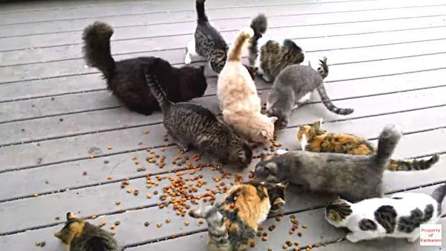 everydaycats3
