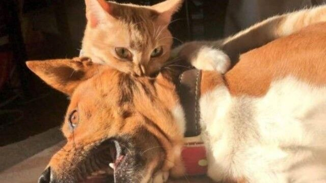 「マスター・アサシン」カプッ!首筋を猫に噛まれた犬の表情がネットで話題に