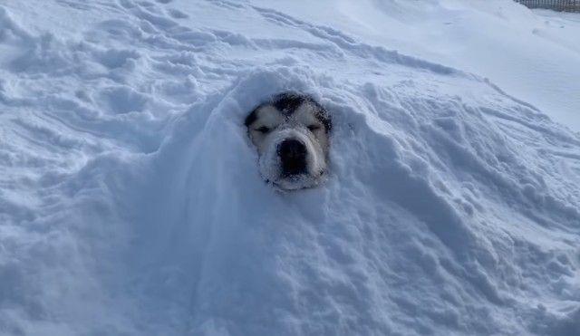 snowdog5_e