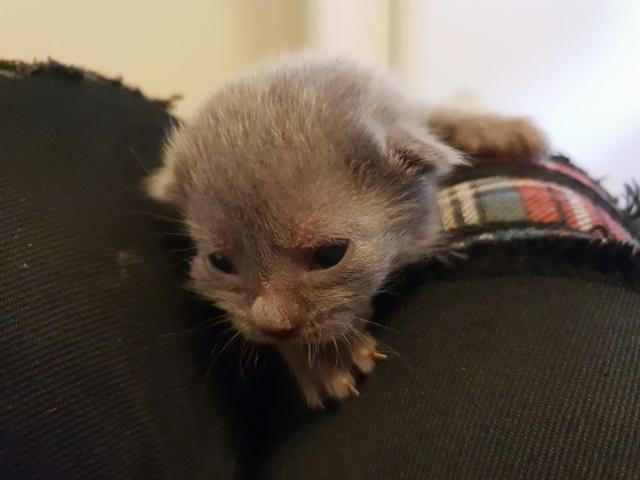 cat-5 [www.imagesplitter.net]