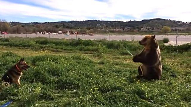 bearspraysdog1
