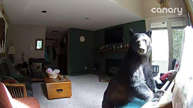 bearplayspiano6