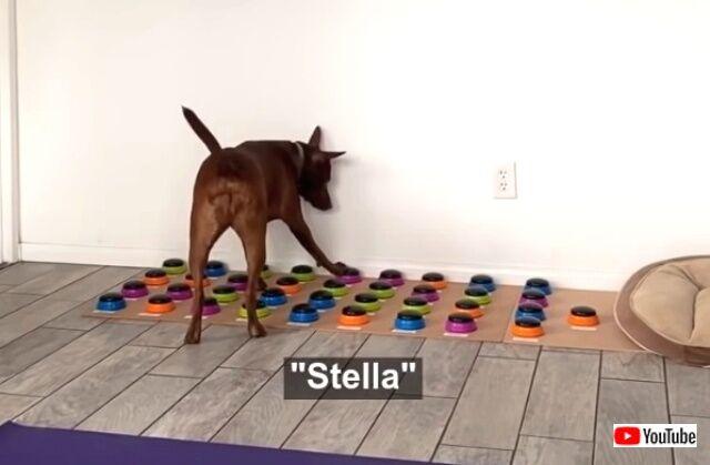 stella2_640