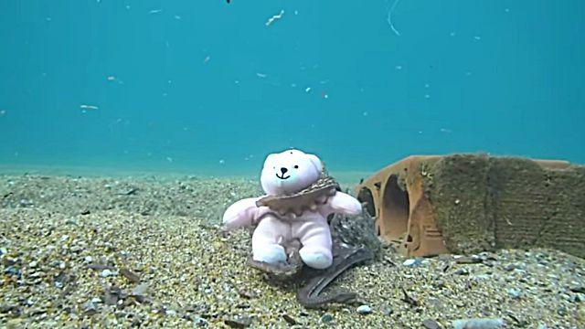 teddynoctopus5