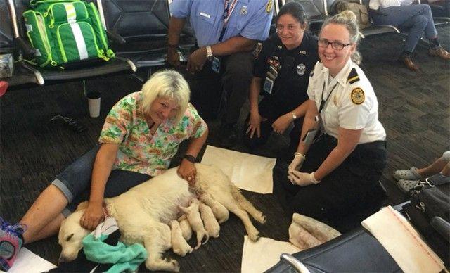 q4ch3-service-dog-birth5_e