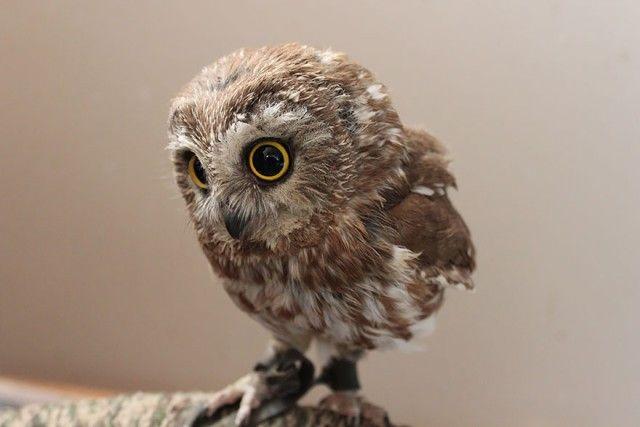 owl-photography-2__880_e