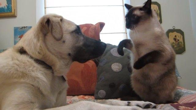 catboxingdog0_e