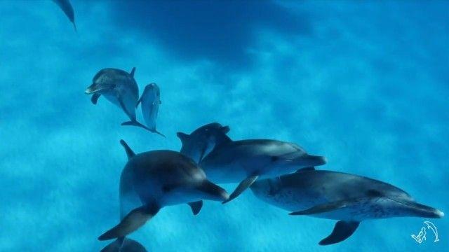 dolphininvitation7_e