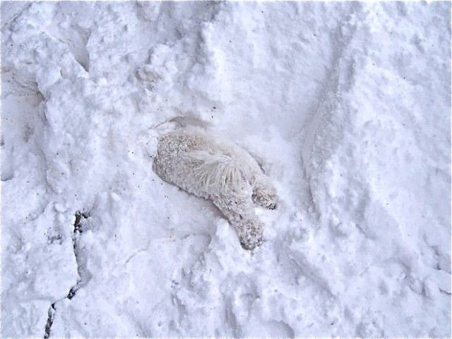 funny-animals-first-snow-cats-dogs24_e