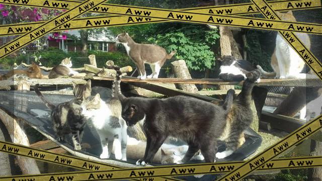 cat-5_e-frame