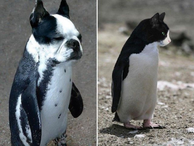 penguin14_e
