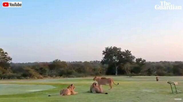 golfclub0_640