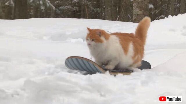 猫のスノーボーダー登場!銀世界を満喫するスノボーキャットを追いかけてみた