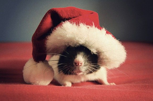 Cute-Christmas-Animals-30_e