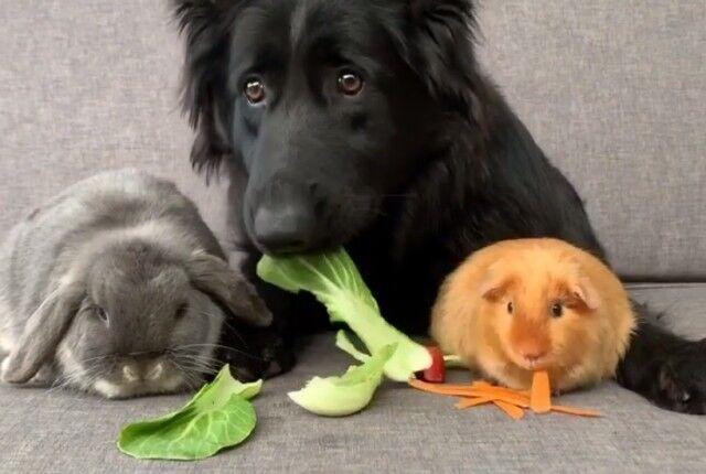 わんことウサギとモルモット、それからヒヨコにその他大勢?異種仲良し組のハッピーライフにズームイン!