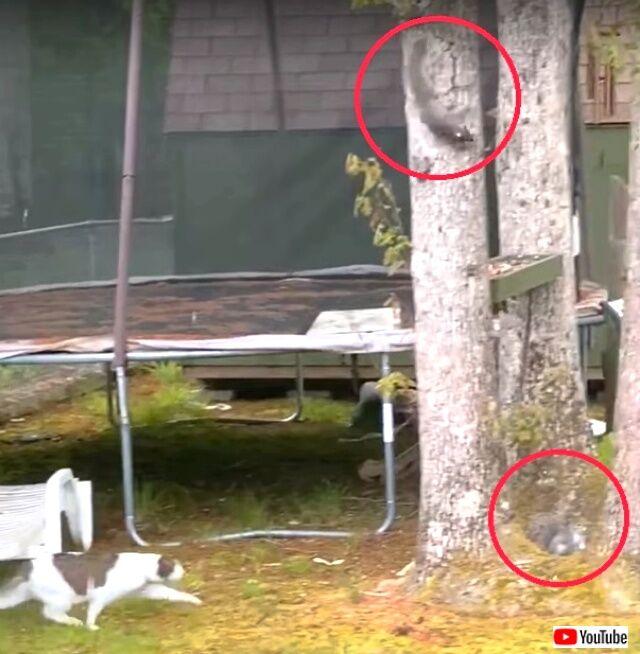 catnsquirrels1_640
