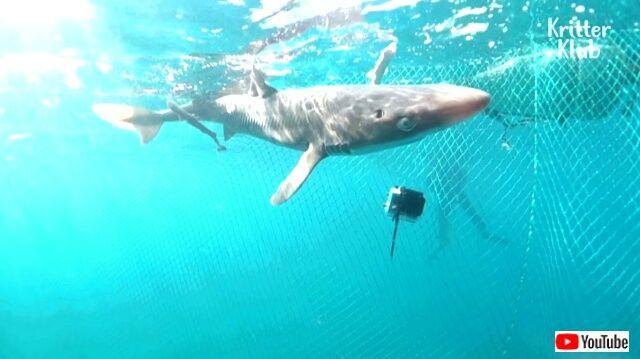 sharkgavebirth11_640