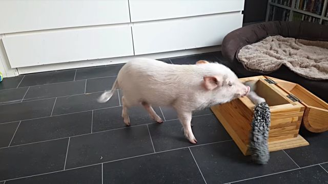 piggy1