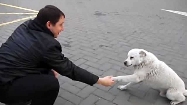 straydog2