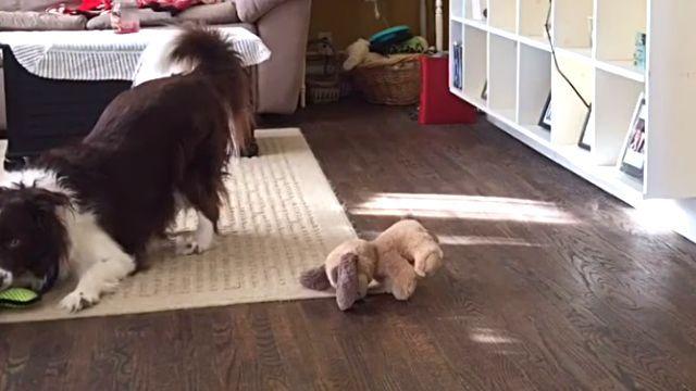 smartdog3