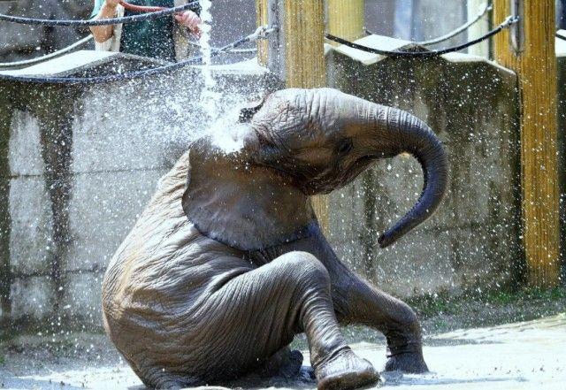 elephant10_e