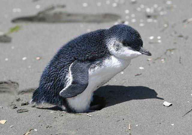 penguin-1 (1)