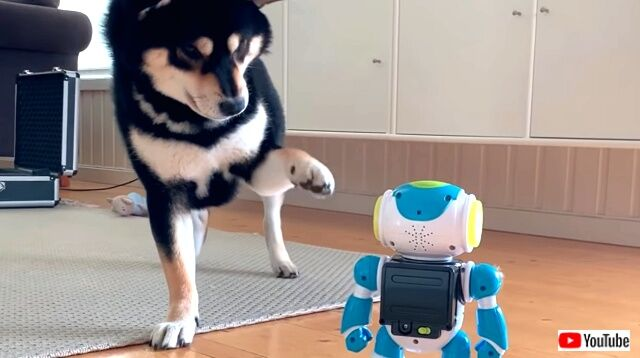 robotvsdoggo5_640