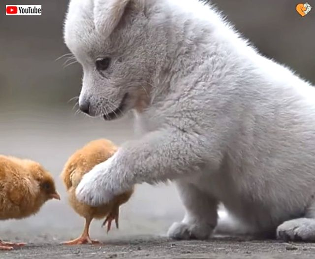 puppynchicks2_640