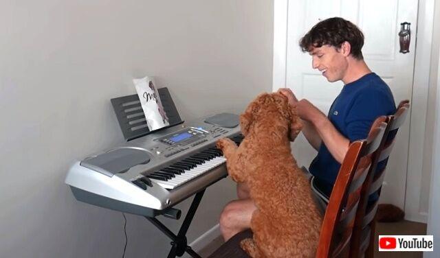 pianodog0_640