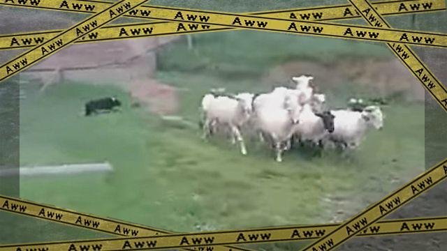 sheepanddog1-frame