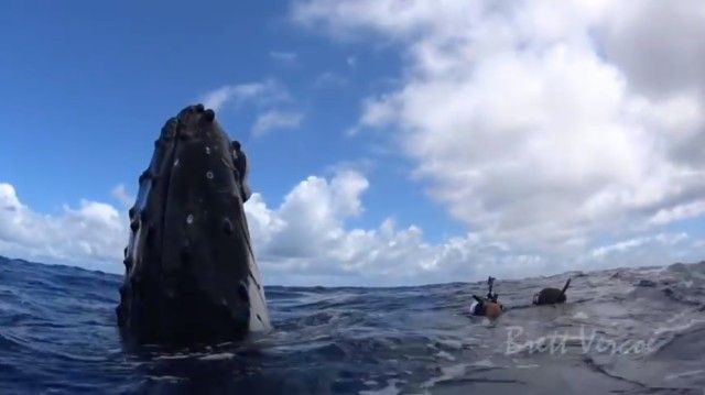 swimwithwhales6_e