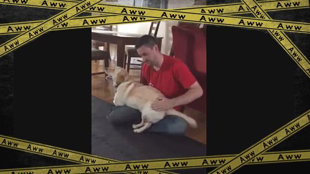 dogdog1-frame