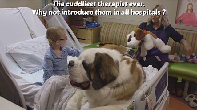 therapydog6