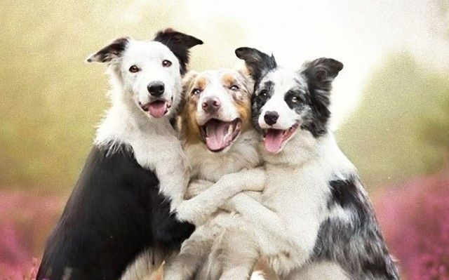 beautifuldogs0_e