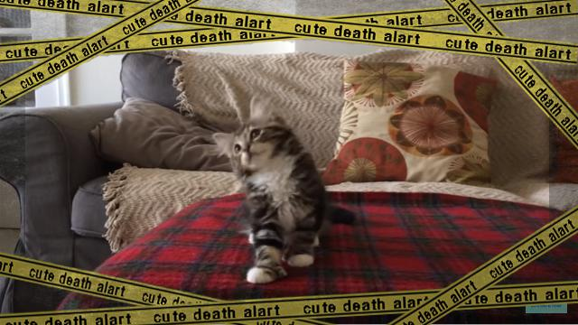 dancingcat [www-frame