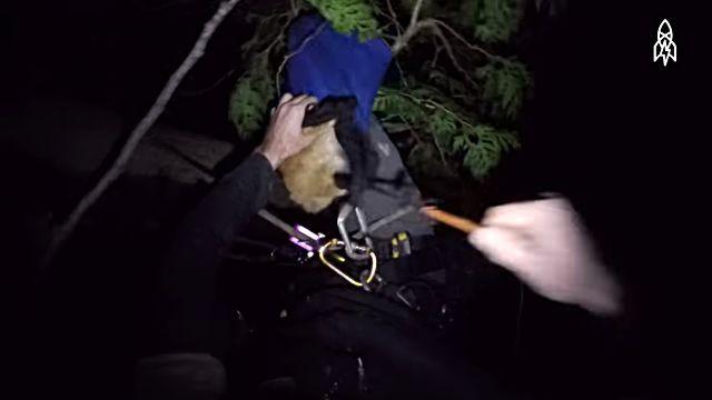 rescuingcats5