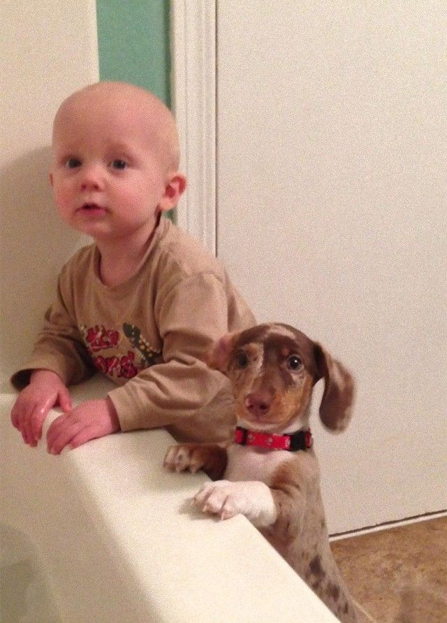 cute-kids-dogs-best-friends-friendship-306-5a996481e45fc__605_e