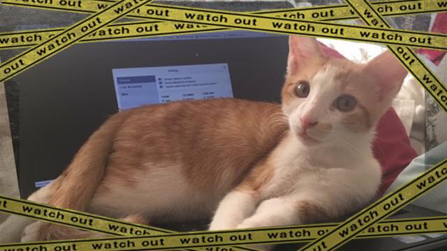 cat-1_e-frame