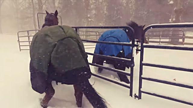 horseregret5