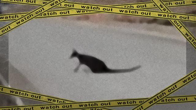 kangaroo-4_e_e-frame